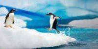 Kreuzfahrt Antarktis